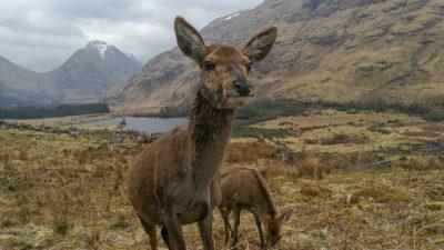 Dolina Glen Etive, Szkocja. Foto: M. Błażejczak
